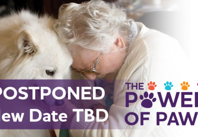 The Power of Paws on Persons with Dementia