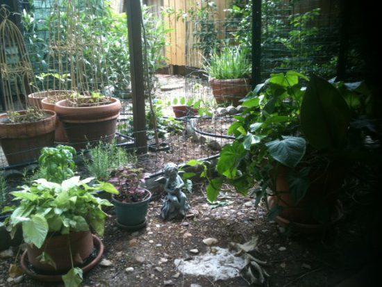 Alzheimer's Caregiver - Herb Garden